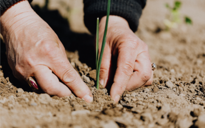 El programa d'ajuts per a actuacions d'eficiència energètica en explotacions agropecuàries